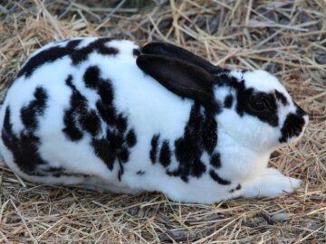 Bunny faced animals